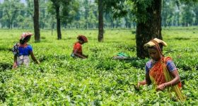 Sylhet tourist attractions