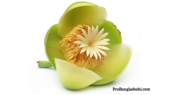 Bangladeshi Seasonal Flower