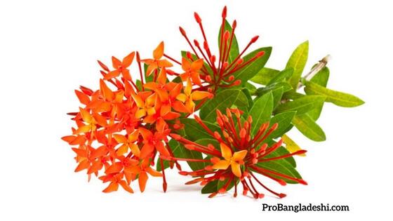 Flowers of Bangladesh